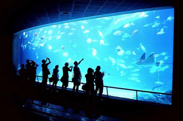 Acquario SEA LIFE Jesolo - image 2