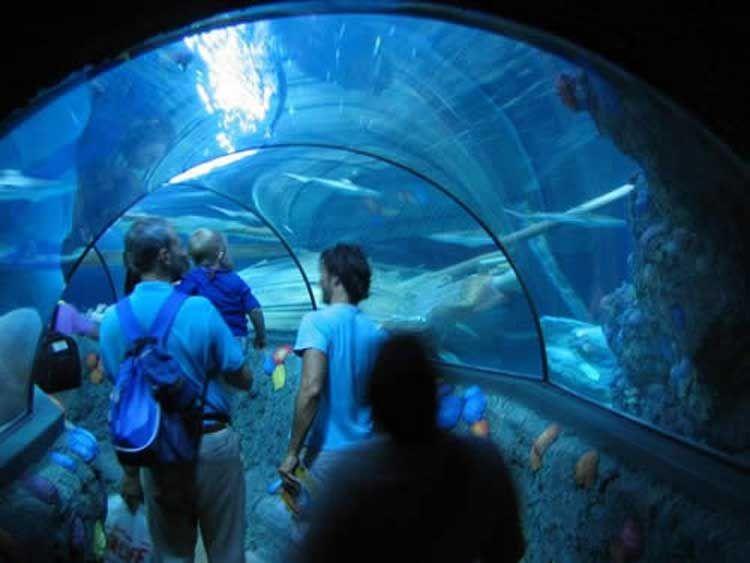 Acquario SEA LIFE Jesolo - image 4